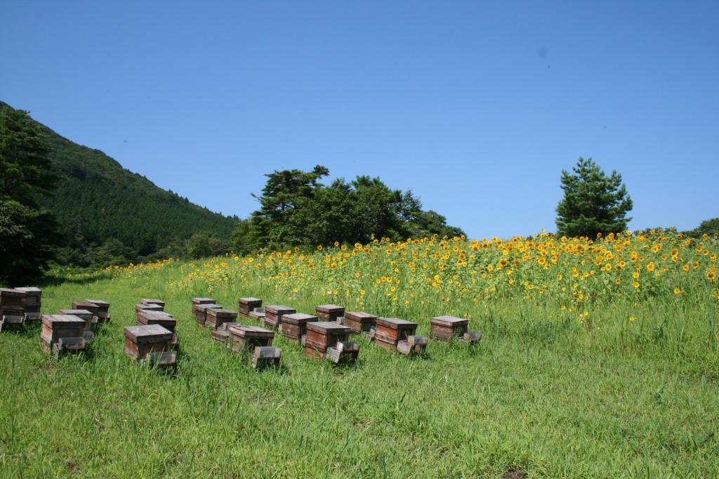 三平山森林公園