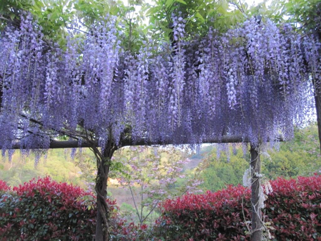 美咲花山園