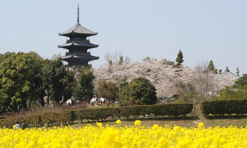 美しい田園風景の中に建つ五重塔。
