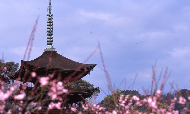064 毛利氏ゆかりの地で歴史探訪