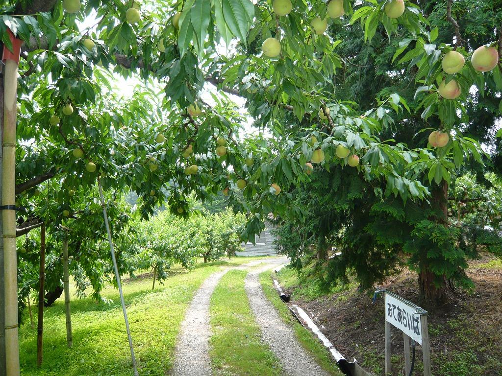 大原観光果樹園