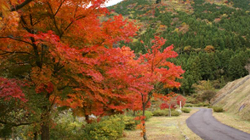 奥津川渓谷