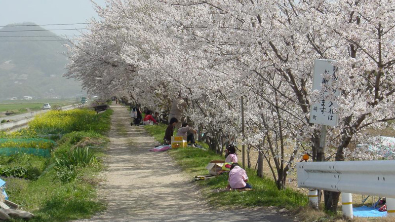 西高崎宮川桜堤